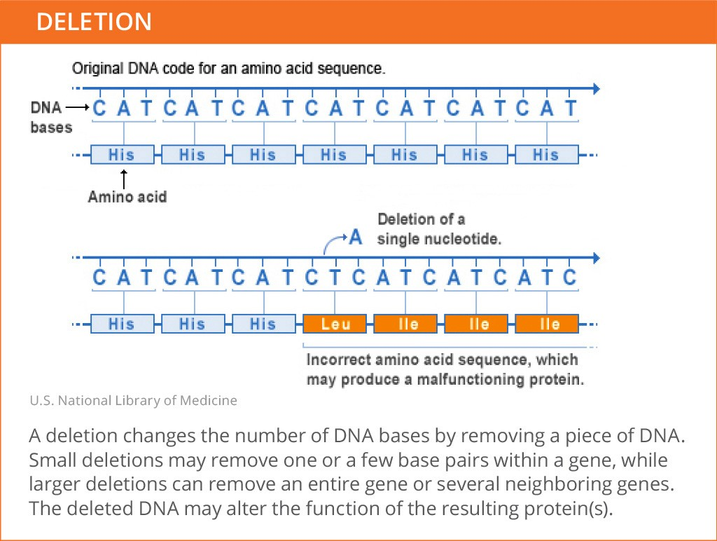 Genetic_Mutations_Deletion