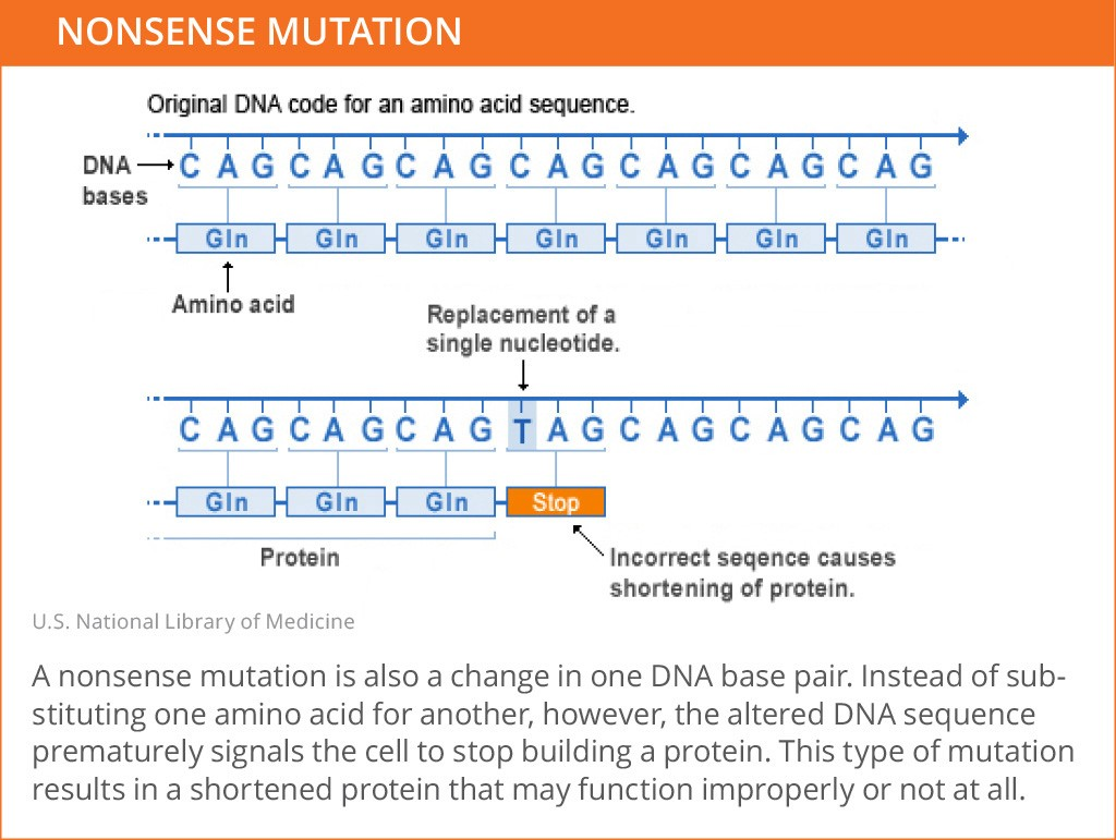 Genetic_Mutations_Nonsense